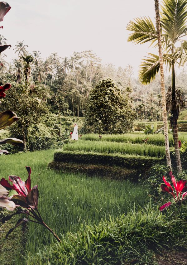 Top things to do and see in and around Ubud, Bali.