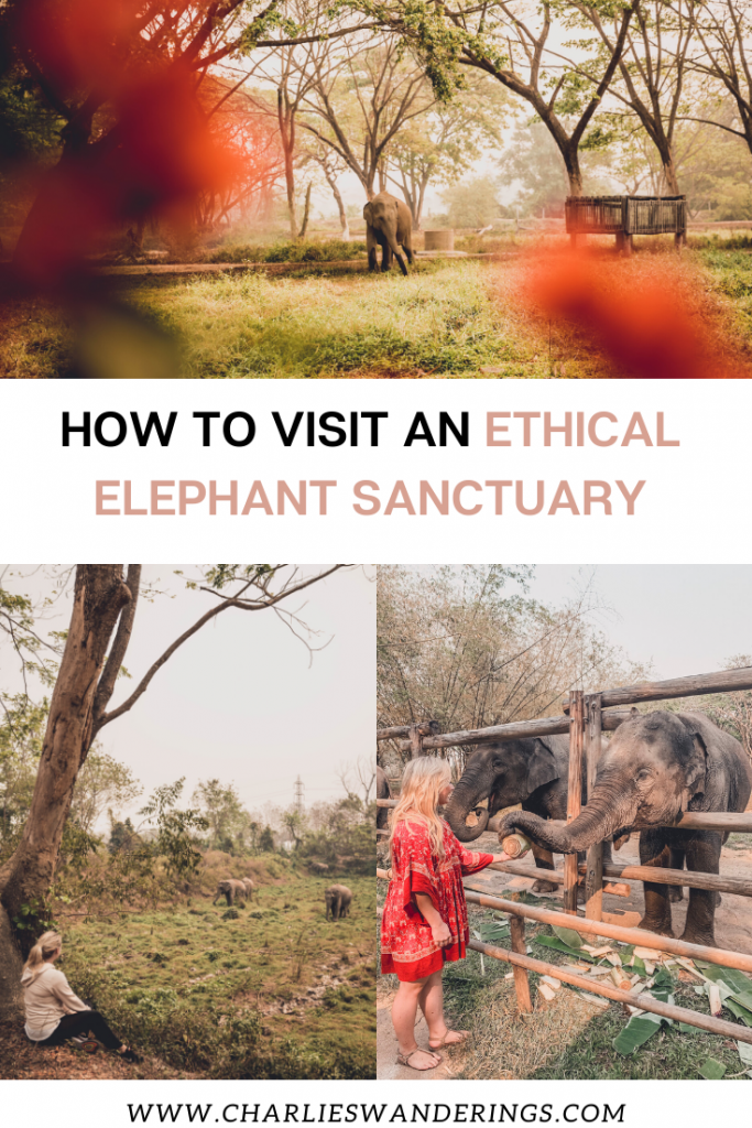 HOW TO VISIT AN ETHICAL ELEPHANT SANCTUARY