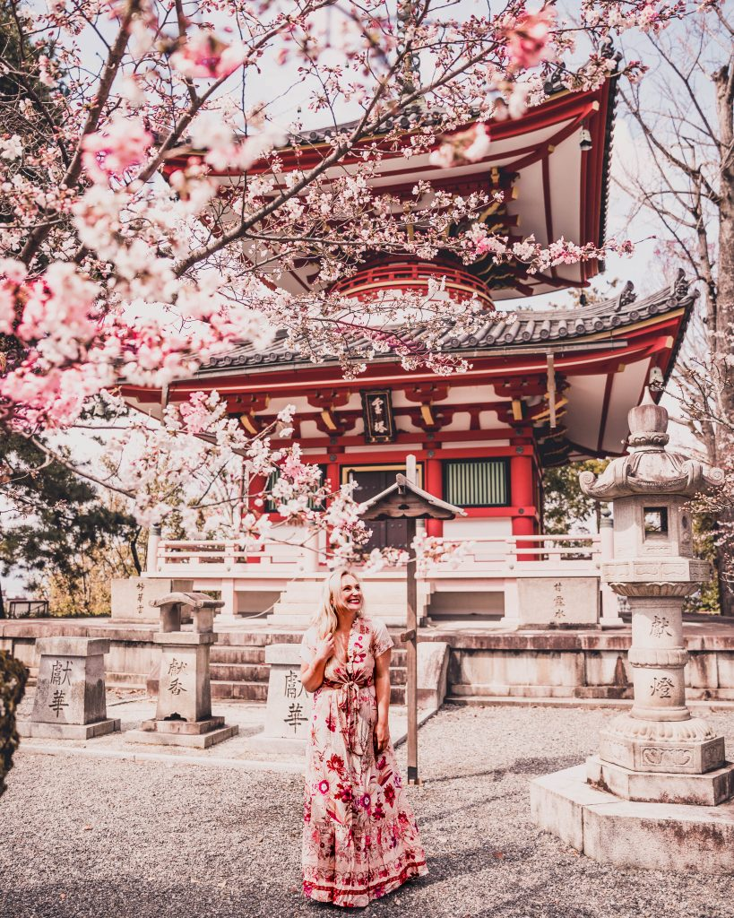 chion-in temple with cherry blossom tree in Kyoto