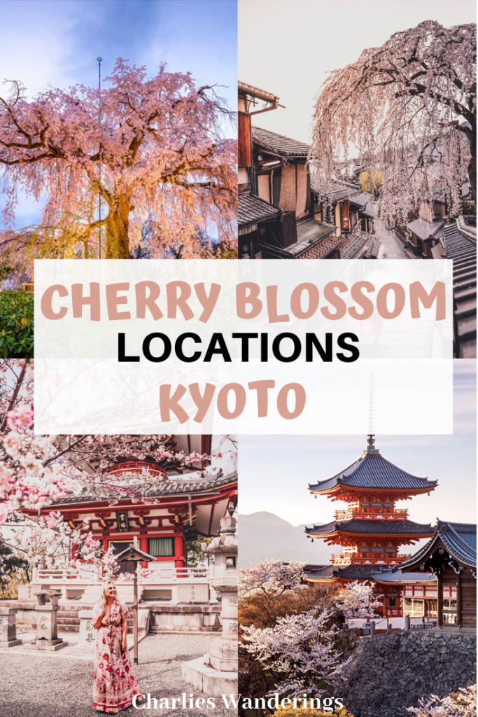 Where to find the Best Cherry Blossom Locations in Kyoto