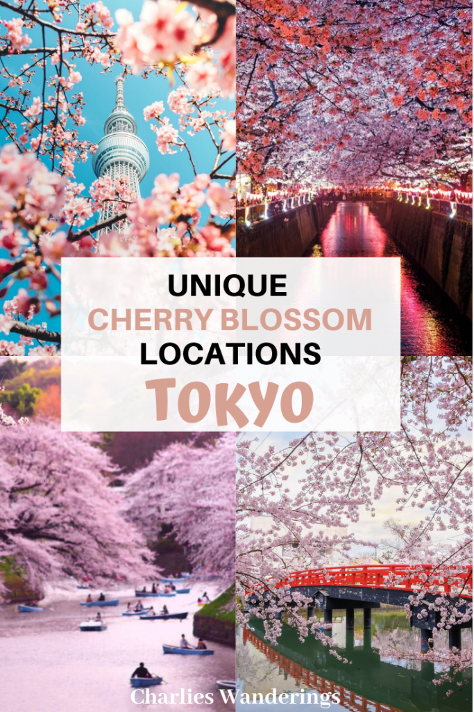 The Best Cherry Blossom Locations in Tokyo