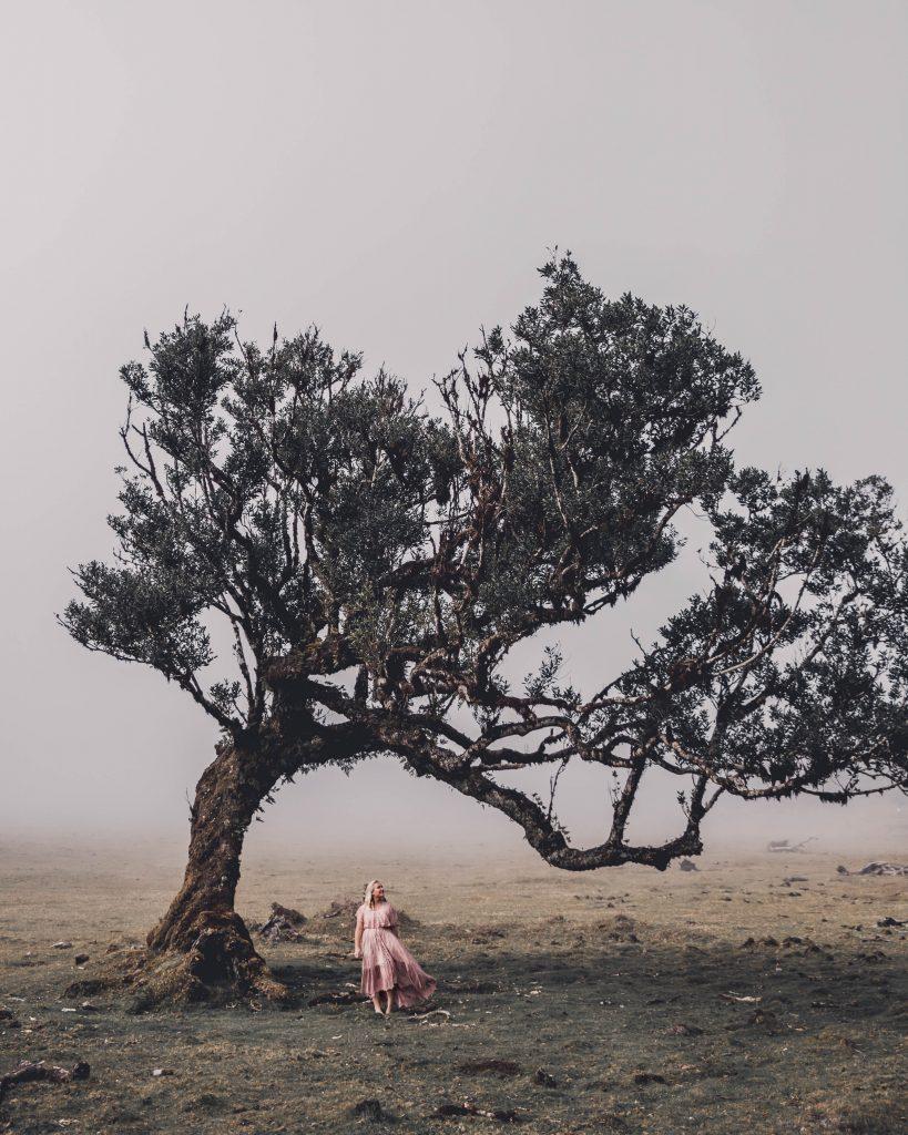 Fanal Laurisilva forest Madeira