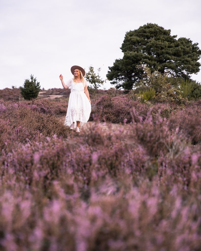 The Most Beautiful Heather Fields in The Netherlands - National Park Veluwezoom